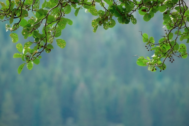 Cornice composta da foglie e rami freschi e verdi estivi. uno sfondo sfocato al centro. uno sfondo naturale