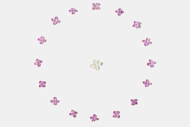 Cornice fatta di fiori di primavera lilla isolati su bianco