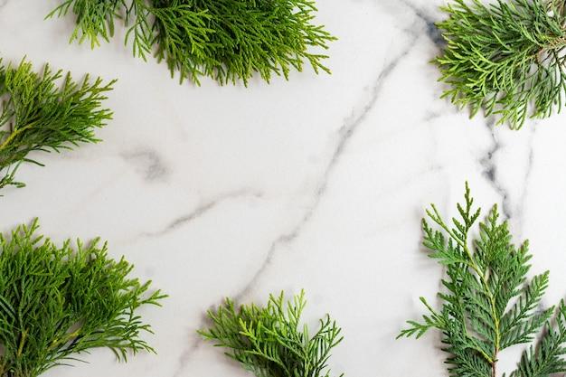 Cornice fatta di rami di thuja di cedro bianco su sfondo di marmo bianco, distesi piatti. scheda mockup con copia spazio.