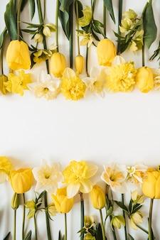 Cornice fatta di narcisi gialli e fiori di tulipano su bianco