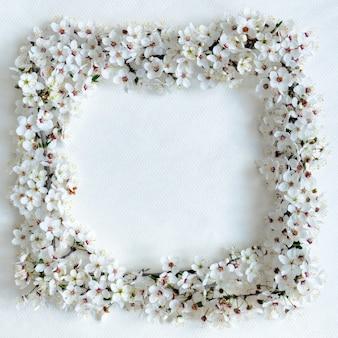 Cornice di ramoscelli bianchi delicati di prugna ciliegia in fiore su sfondo bianco