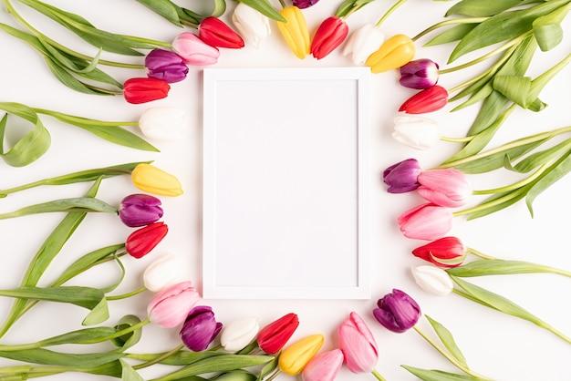 Cornice con bellissimi tulipani colorati su sfondo bianco.