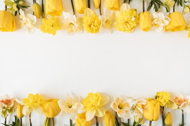 Cornice con spazio vuoto della copia fatto di narciso giallo e fiori di tulipano su bianco. concetto di vacanza festiva floreale vista dall'alto, piatto laico