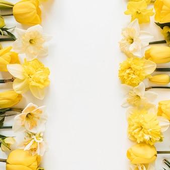 Cornice con spazio vuoto della copia fatto di narciso giallo e fiori di tulipano su bianco