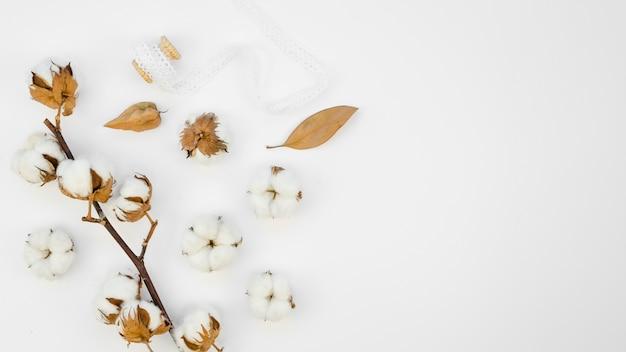 Cornice con fiori di cotone su sfondo bianco