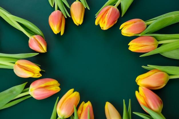 Cornice con tulipani gialli-rossi freschi su sfondo verde scuro. concetto di giornata internazionale della donna, festa della mamma, pasqua
