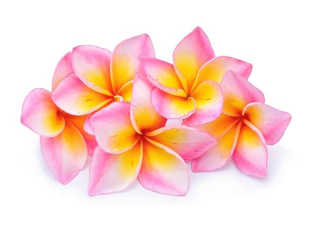 Fiore del frangipane isolato su bianco
