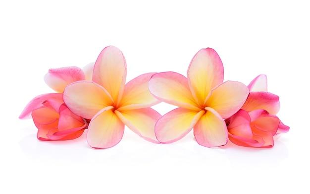 Fiore di frangipane isolato
