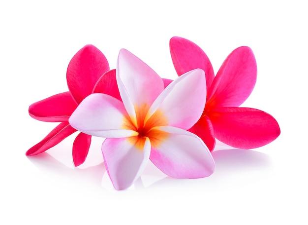 Fiore del frangipane isolato