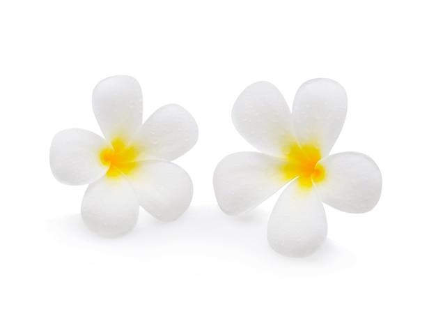 Fiore del frangipane su bianco