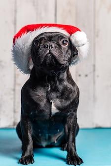 Cane bulldog francese, con cappello di babbo natale