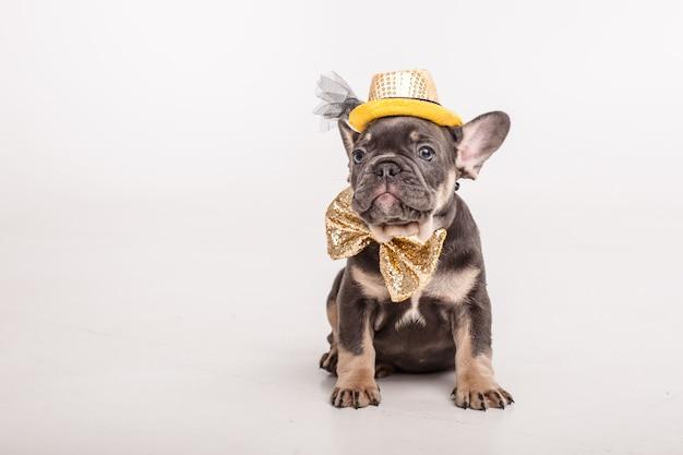 Un cucciolo di bulldog francese nella farfalla di carnevale di un gentiluomo è isolato su bianco