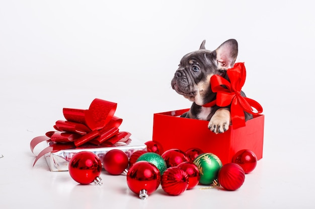 Cucciolo di bulldog francese in confezione regalo con palle di natale isolato su bianco,