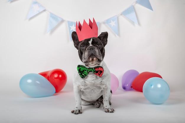 Bulldog francese seduto con farfallino, corona rossa e palloncini colorati su bianco.