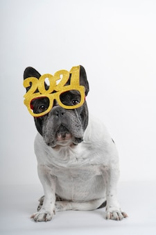 Bulldog francese con bicchieri di testo di felice anno nuovo 2021.