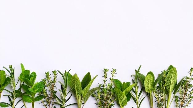 Erbe aromatiche fresche isolate sulla superficie bianca. spazio per il testo