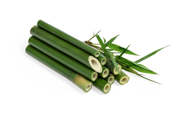 Bambù fresco e foglia verde isolati su una superficie bianca