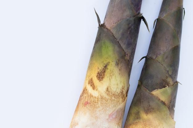 Sfondo bianco di germogli di bambù freschi.