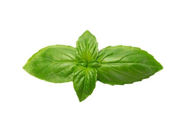 Le foglie di basilico fresco sono isolate su uno sfondo bianco senza ombre.