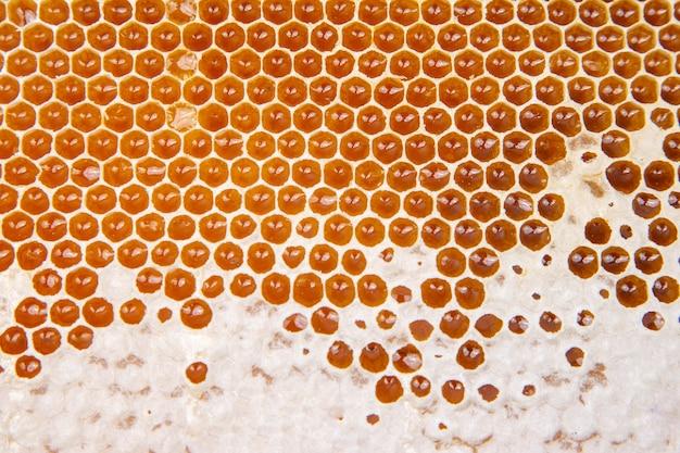 Miele fresco dell'ape in un favo sul primo piano chiaro. cibo naturale vitaminico. trama e sfondo