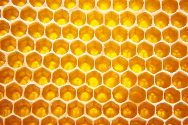 Miele fresco dell'ape in un favo sul primo piano chiaro