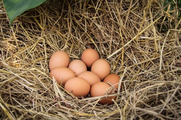 Uova marroni fresche in un nido in paglia.