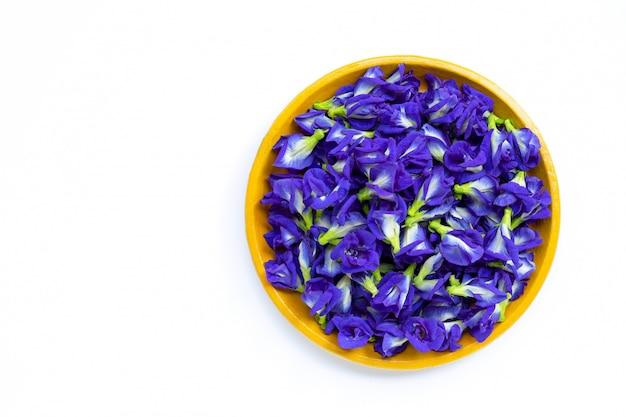 Fiore fresco del pisello di farfalla o pisello in piatto giallo su bianco