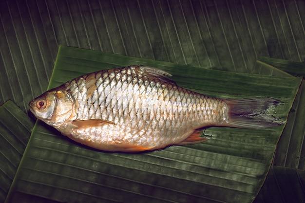 Il pesce carpa fresca d'acqua dolce è posto su una foglia di banana verde scuro