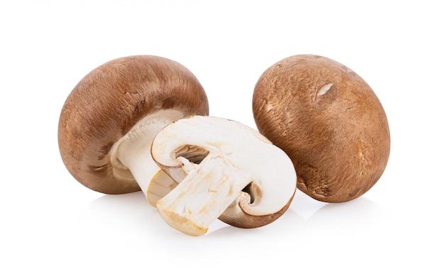 Funghi freschi del fungo prataiolo isolati su fondo bianco. piena profondità di campo