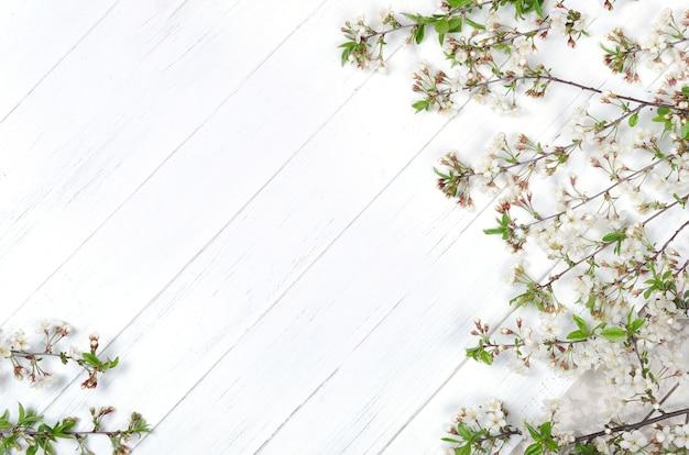 Fiori di ciliegio freschi su assi di legno verniciato bianco. copia spazio