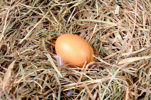 Un uovo di gallina fresco giace nell'erba secca