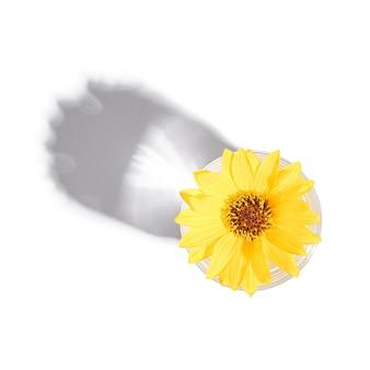 Bevanda fresca acqua chiara con fiore giallo in vetro isolato