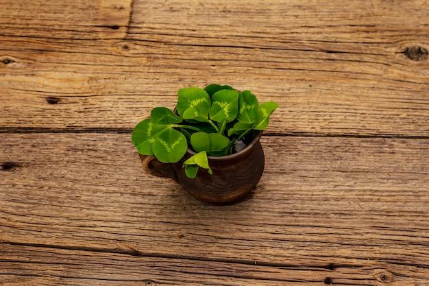 Mazzo di trifoglio fresco in tazza di ceramica. simbolo di buona fortuna, concetto di san patrizio