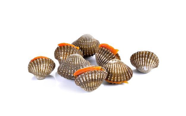 Frutti di mare freschi dei vongole su bianco