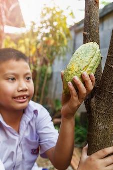 Baccelli di cacao fresco nella mano di un bambino