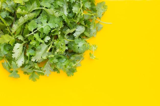 Foglie di coriandolo fresco su sfondo giallo.