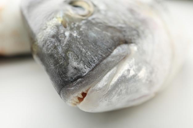 Pesce fresco di dorado su bianco