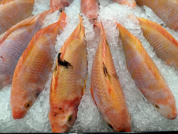 Pesce fresco su ghiaccio nel mercato