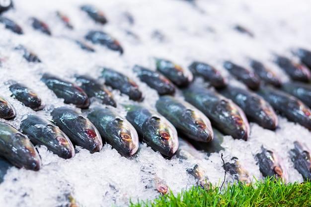 Pesce fresco su ghiaccio in un negozio di frutti di mare negozio