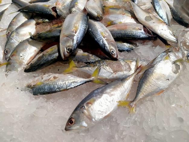 Pesce fresco su ghiaccio al supermercato