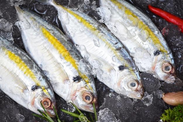 Crudo di pesce fresco scad a strisce gialle al limone, sgombro su ghiaccio