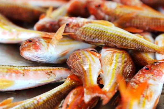 Triglia di pesce fresco