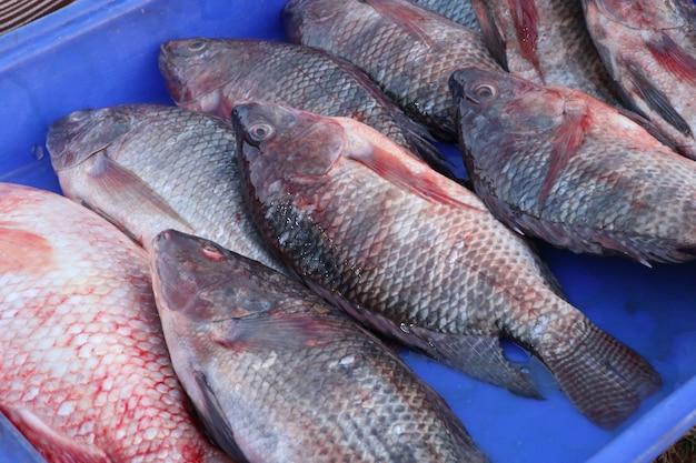 Pesci freschi al mercato
