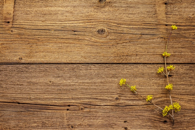 Rametti di fioritura freschi di corniolo su fondo di legno d'annata. concetto di umore di primavera, modello di carta, carta da parati, sfondo