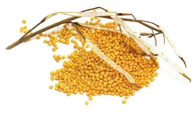 Senape dorata fresca con fagioli secchi su sfondo bianco