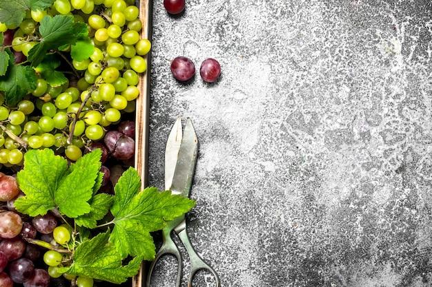 Uva fresca con foglie su un vassoio di legno. su un tavolo rustico.