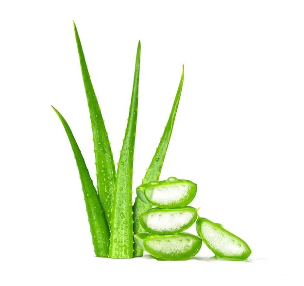 Foglie verdi fresche di vera dell'aloe su fondo bianco