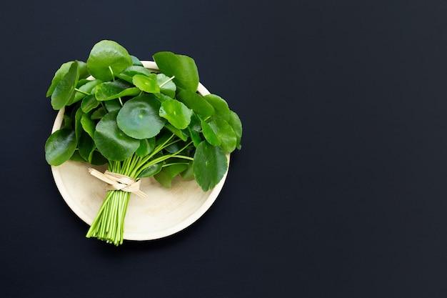 Foglie verdi fresche di centella asiatica o piante di centella asiatica sulla superficie scura.