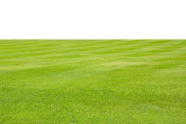 Prato di erba verde fresca isolato su sfondo bianco