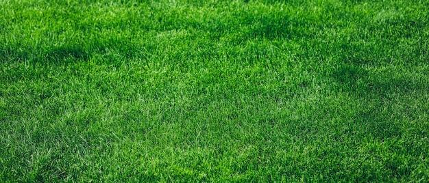 Priorità bassa di struttura dell'erba verde fresca